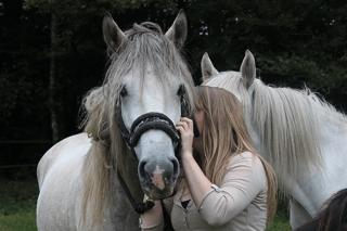 Complicité entre le cheval et son cavalier