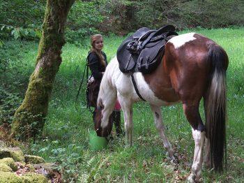 Zack, cheval croisé quarter horse, reçoit une ration pendant la pause du lidi lors d'une randonnée.