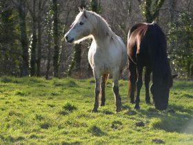 Afin de respecter au mieux leurs besoins naturels, nos chevaux vivent en groupe et au pré toute l'année.