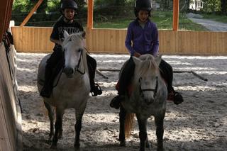 Les poneys vivement ensemble au pré et travaillent ensemble en toute quiétude
