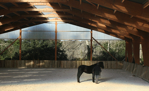 Nous proposons l'éducation de vos chevaux et leur débourrage