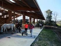 Les jeunes participent aux ateliers d'écurie
