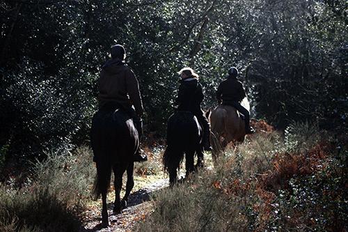 Toute l'année de nombreuses randonnées équestres sont proposées